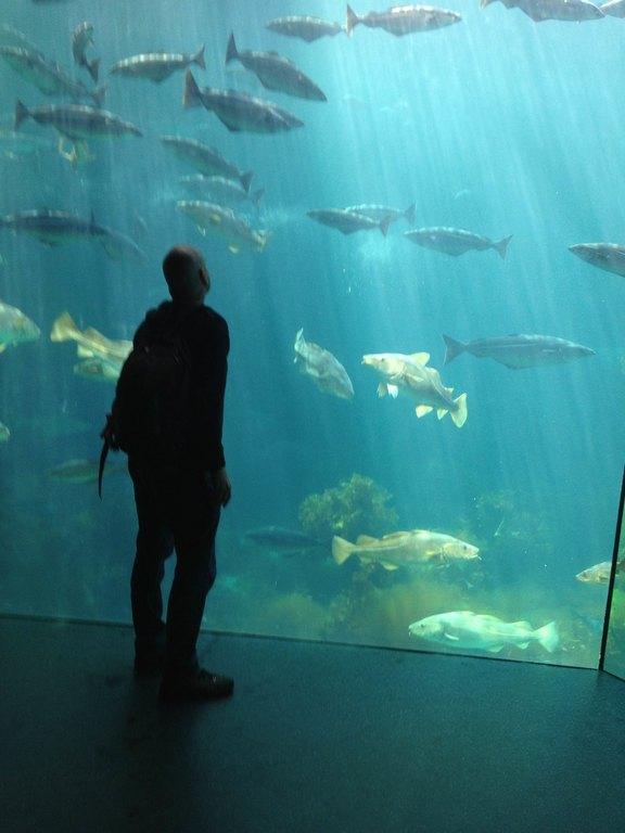 Aquarium in Aalesund