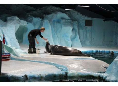 Polaria - the world's northernmost aquarium