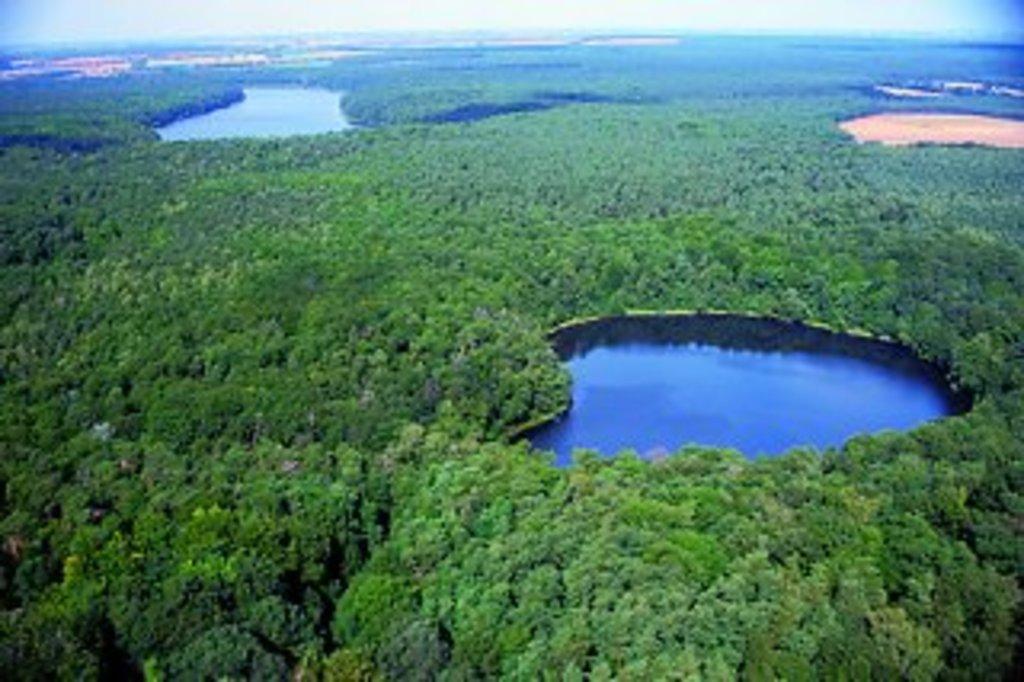 Wielkopolski National Park - 20 km SW from Poznan