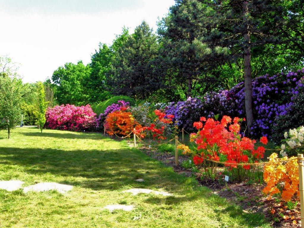 Warsaw - Garden Powsin