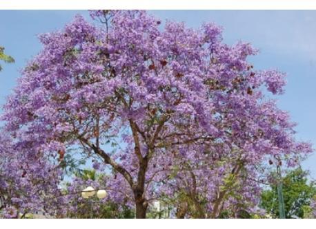 Trees at spring