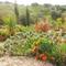 Mediterraner Garten/ Mediterranean garden