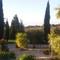 Mediterraner Bewuchs- Mediterranean plants and trees