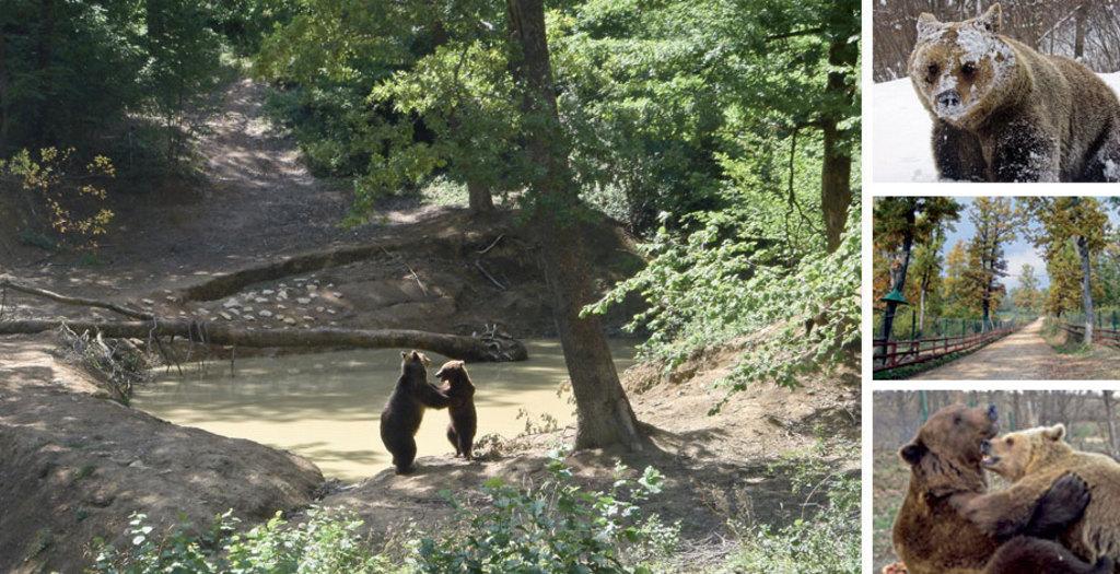 Libearty Bear Sanctuar, 5 km