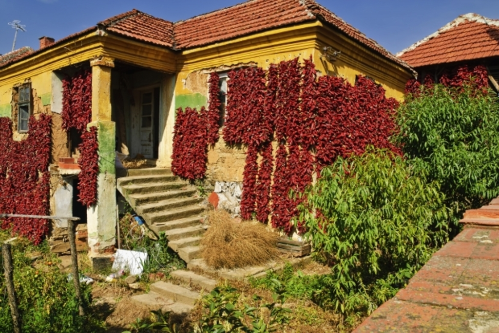 House covered with dried paprika, village near Nis