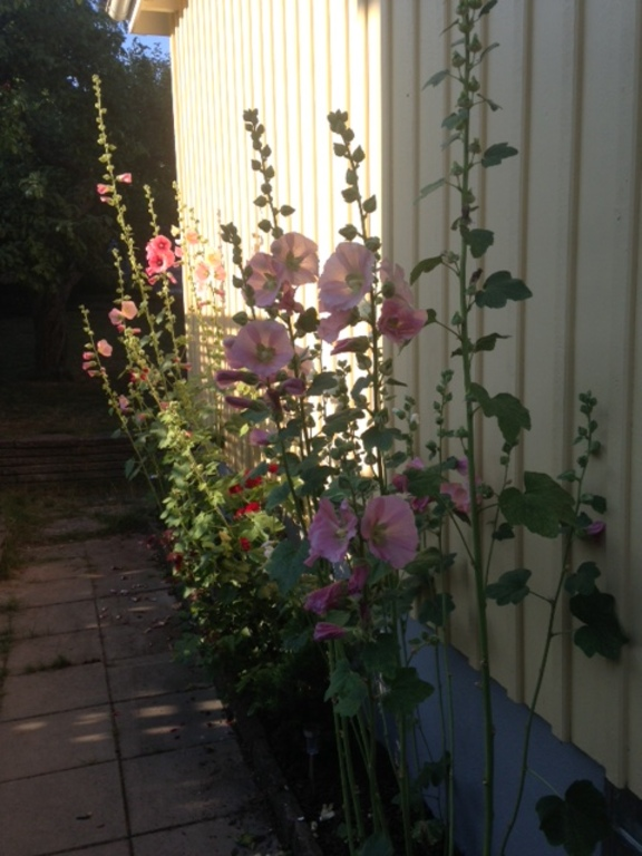 Summer in garden