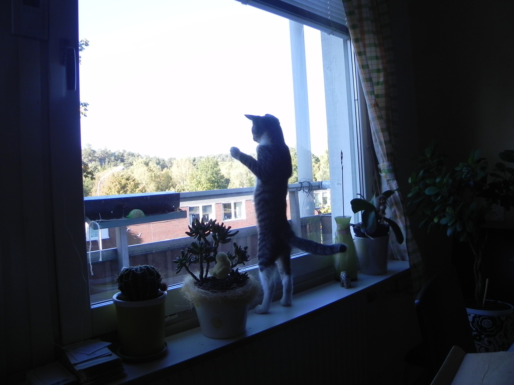 Our cat takes a look at the surroundings from our kitchen
