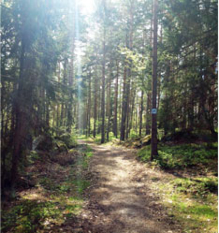 Excercise track in the forrest