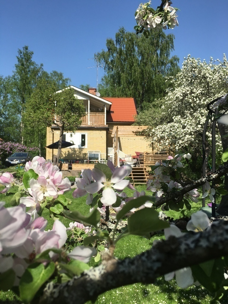 Our house and apple tree in bloom.