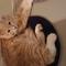 our cat Kola (caramel in English)