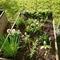 Odlingslåda i trädgården med kryddväxter ni får äta!
