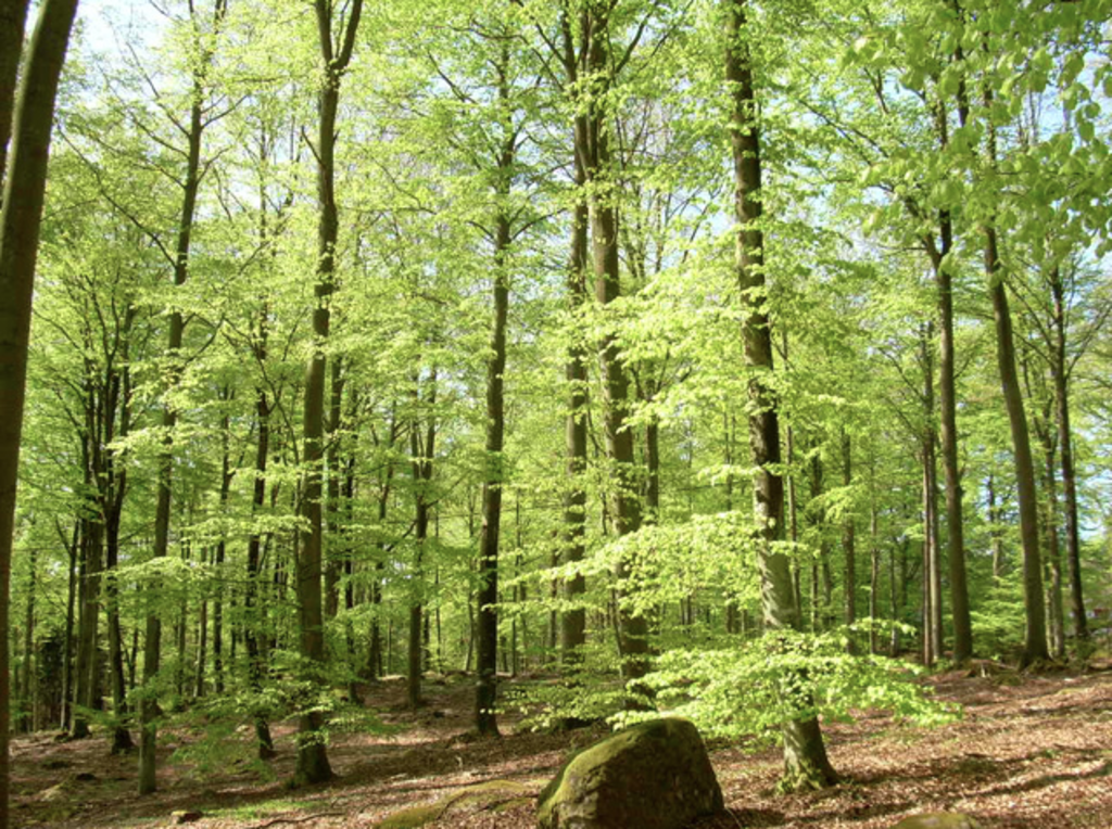 Bokskogen (Beech forest) just outside the city - lovely for walks and picnics