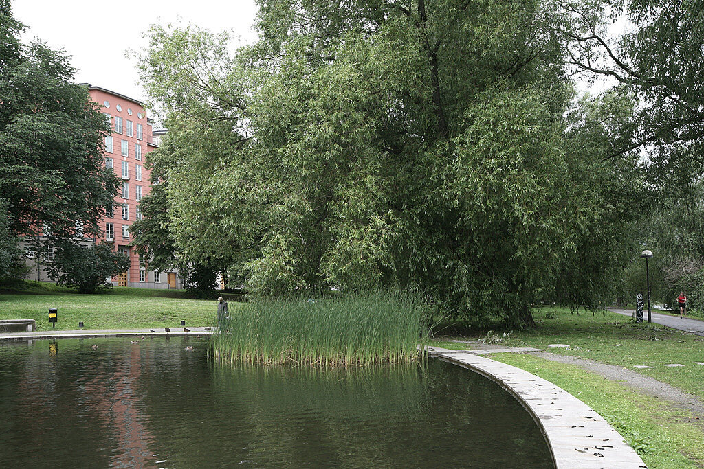 Pond with ducks next to the building