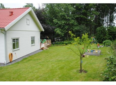Garden back of the house