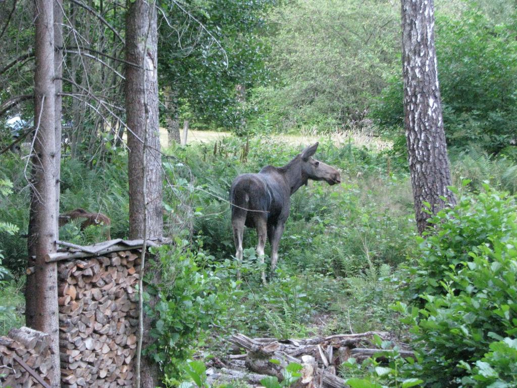 Often visited by elks