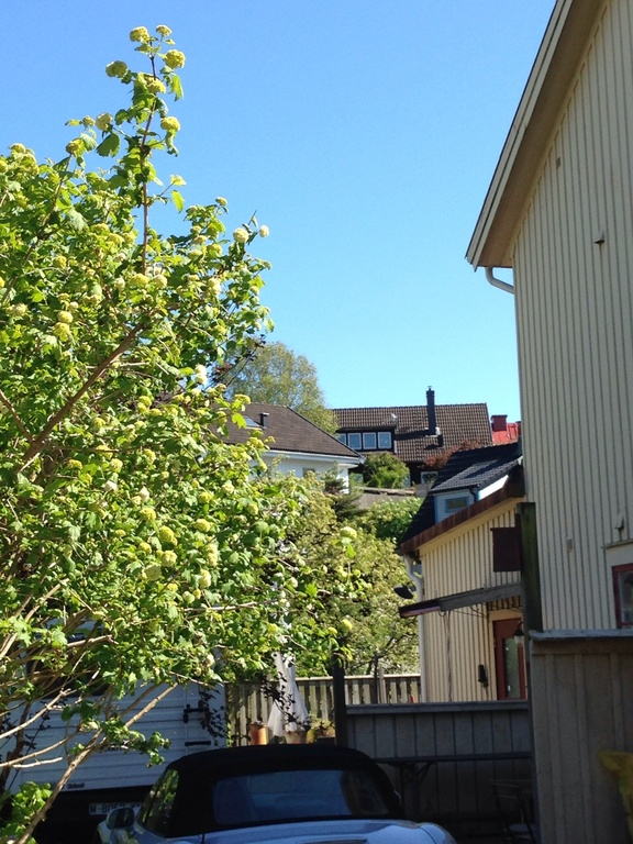 Our house from the street. The black house in the back of the picture.  Gothenburg