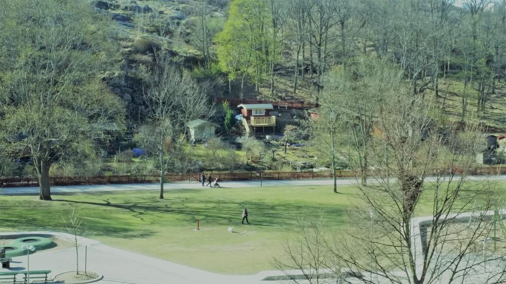 Park surrounding our building