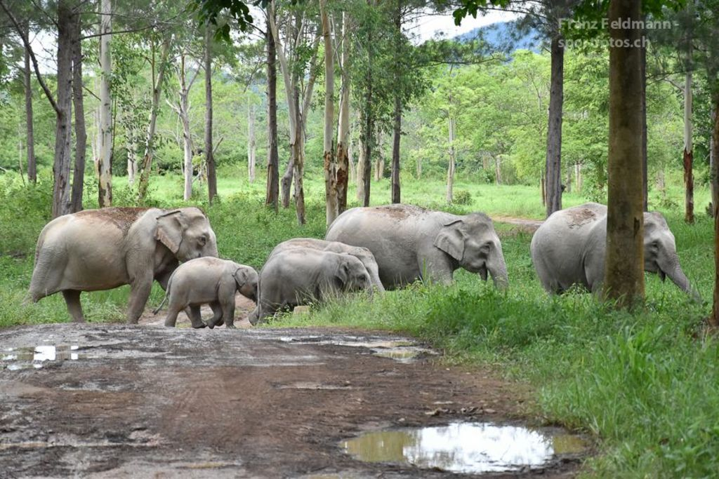 Wild elefant in Kui Buri National Park