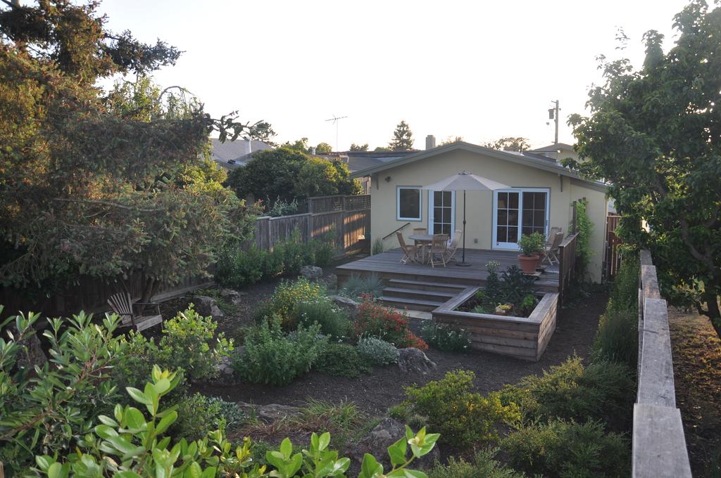 Garden - looking west