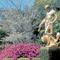 Brookgreen Garden early flowers