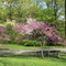 Arnold Arboretum in Spring