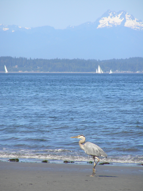 Nearby Carkeek Park, 7 minutes by car