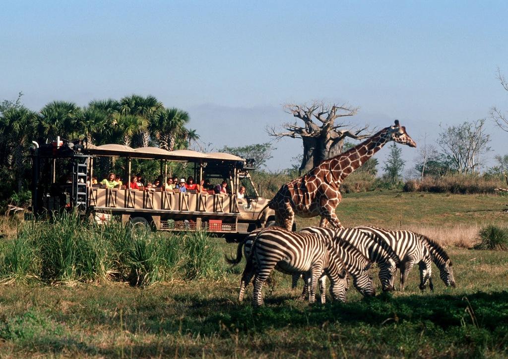 Disney's Animal Kingdom - 45 minute drive