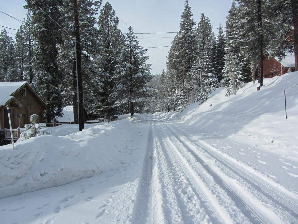St. Bernard after snowfall