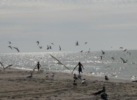 Beach Birds on Gulf of Mexico