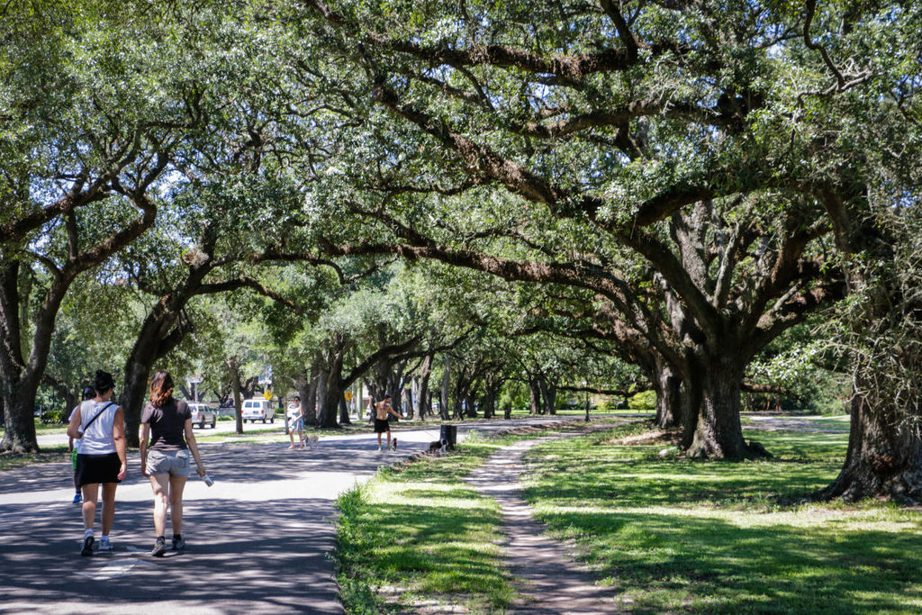 The walking trail at Audubon Park (five blocks from our house)