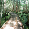 Jean Lafitte National Park (an elevated walkway through the swamp) (A 20 mile drive from our house)