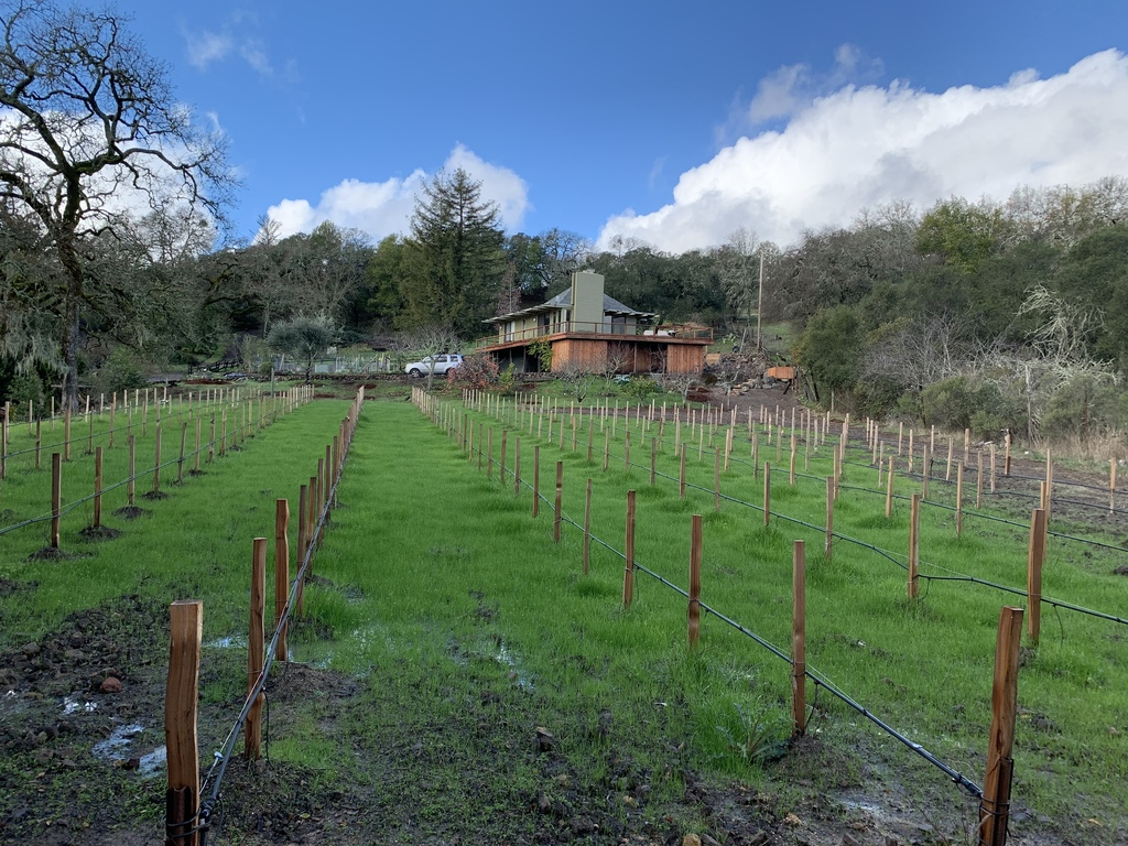 The house from the vineyard in early spring
