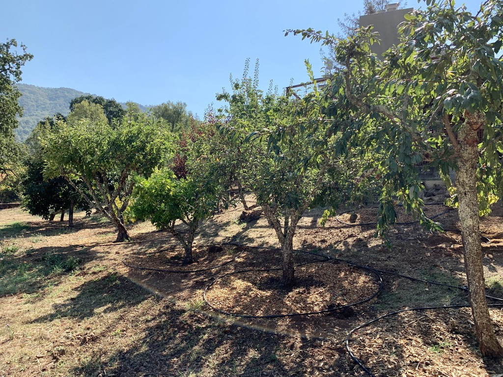 The orchard has 32 various fruit and olive trees