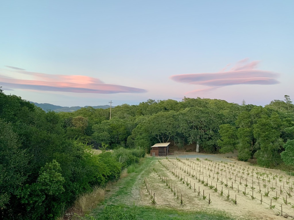 """360º views are unobstructed by any other homes. (At the bottom of the vineyard is Kitty's """"Pumphouse"""" writing studio)"""
