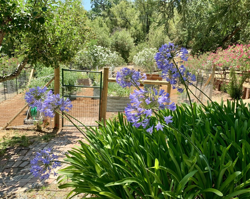 The vegetable garden gate