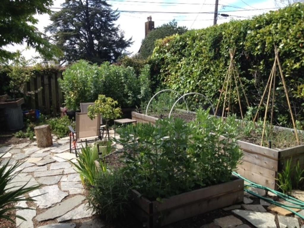 West garden has beds of vegetables and berries.