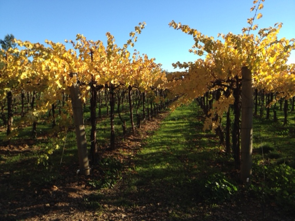 In an hour you can be in Napa Valley or Sonoma for wine tasting and tours