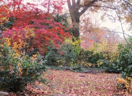 Atlanta - Side Garden in Autumn