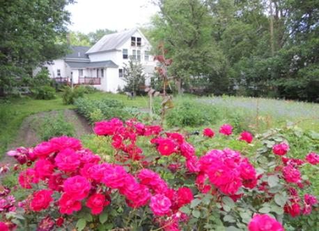 rear yard, garden & wild flowers