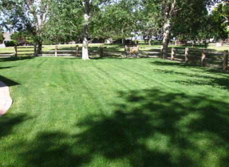 Large backyard with compete lawn care service