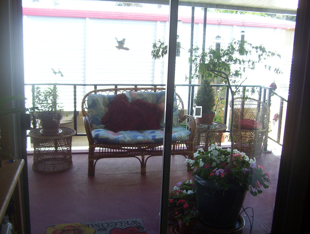 From my breakfast table, I look out onto the balcony with flowers, birds, and herbs