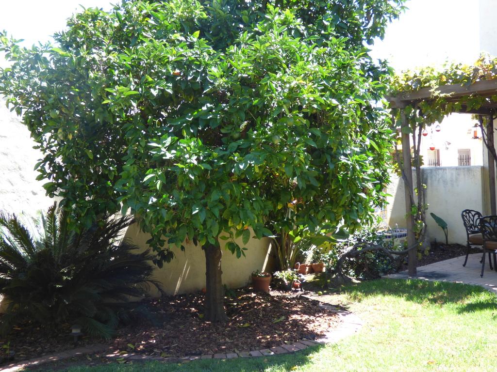 Garden. View 5