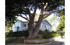 Our house on the corner with the big heritage cypress tree