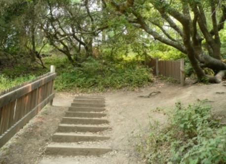 The Earthquake Trail at Pt. Reyes shows the earth movement in the 1906 SF Earthquake