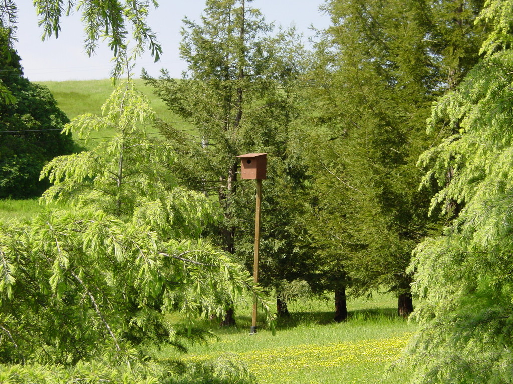 one of two owl houses