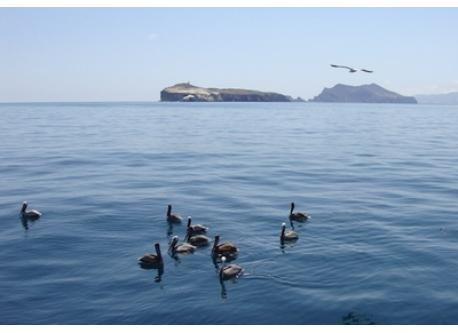Pelicans off Anacapa Island, Channel Island National Park.