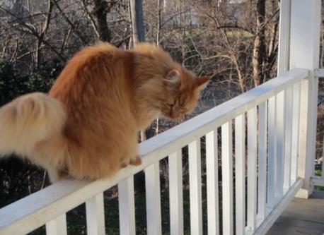 Max, our cat