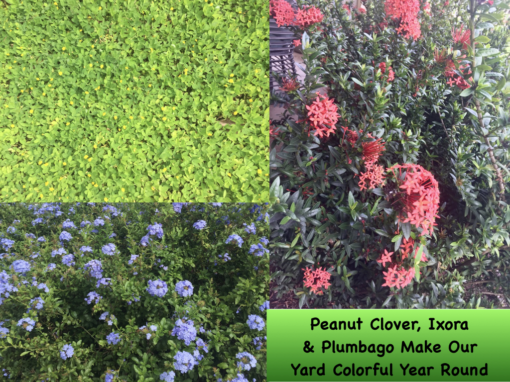 Flowering plants provide colorful contrast to our ever green lawn