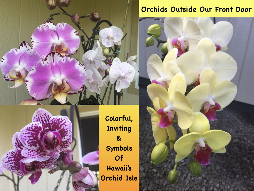 Orchids close up & personal