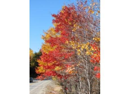 Fall color Coastal Maine